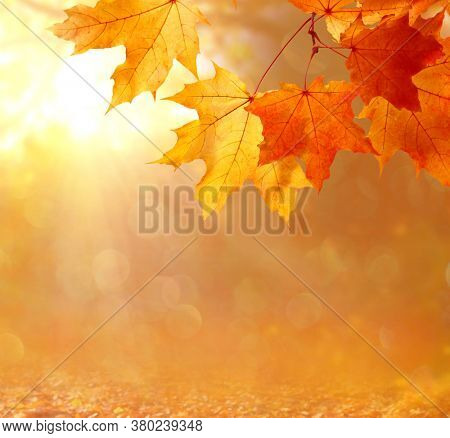 Beautiful autumn  landscape with yellow trees and sun. Colorful foliage in the park. Falling  leaves natural background .