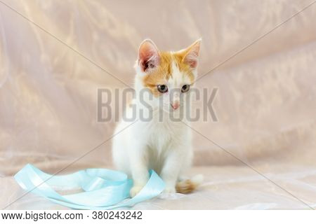White Kitten With Red Spots . An Enlightened, Disarming Look. Pink Nose. The Moustache Sticks Out. C