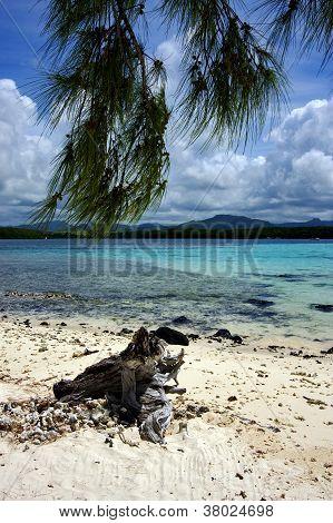Tree In Deus Cocos Mauritius