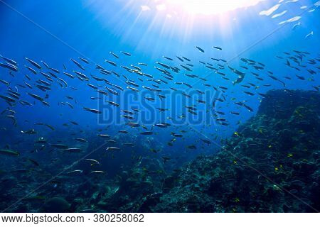 Underwater Photo Of School Fish In Sunlight At The Coral Reef Of Phi Phi Islands In Thailand.