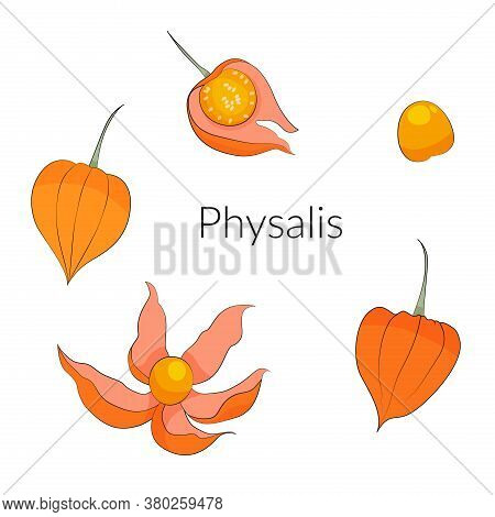 Physalis Berries And Leaves Set, Superfoods Stock Vector Illustration.