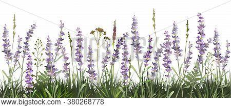 Lavender Decorative Field. Lavender Background. Vector Illustration