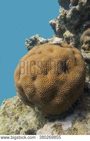 Colorful Coral Reef At The Bottom Of Tropical Sea, Great Favites Abdita Coral, Underwater Landscape