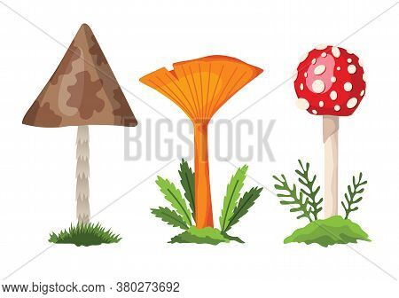 Mushroom And Toadstool. Illustration Of The Different Types Of Mushrooms On A White Background. Flat