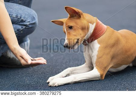 Unrecognizable Person, Hand Of Owner Is Feeding Beautiful Smart Hungry Dog With Treats As Rewards Fo