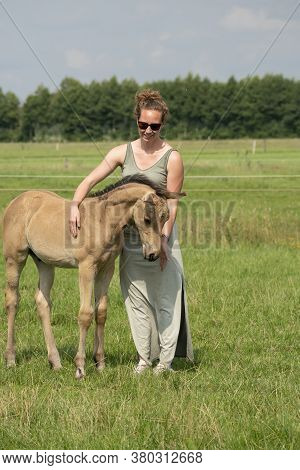 Young Woman Cuddling With Her Best Friend, Falcon Color Stallion Foal, Sharing Love And Mutual Affec