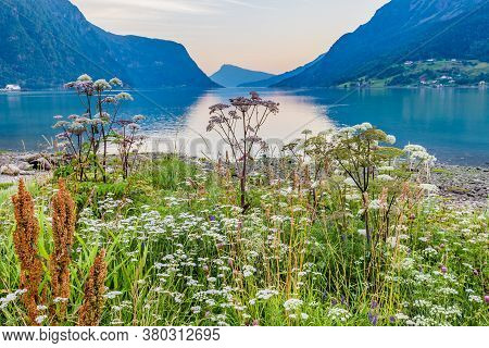 View On Beautiful Sognefjord During Blue Hour With Flowers In The Front From Skjolden Sogn Og Fjorda