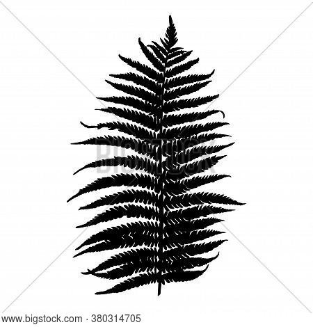 Sketch. Ink. Hand Drawing. Fern Leaves. Isolated Object.