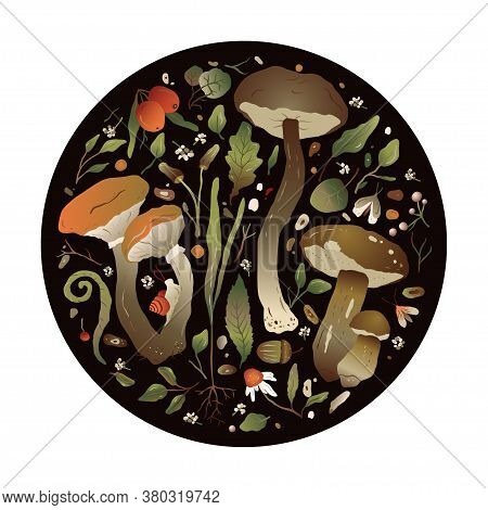 Round Forest Vector Nature Greeting Card With Different Mushrooms, Fern And Forest Herbs.  Beautiful