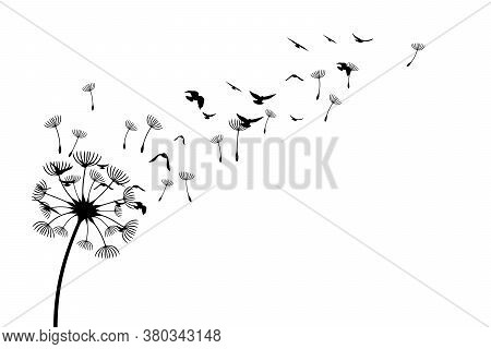 Dandelion With Flying Birds And Seeds. Vector Isolated Decoration Element From Scattered Silhouettes