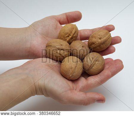 Walnuts In Hands. Natural Snack. Healthful Delicious. Seasonal Walnuts. Tasty Vegan Nuts. Organic Di