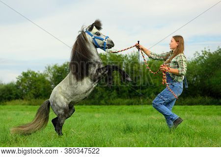 The Caucasian Woman And Gray Pony Are In Rural. The Adult Horsewoman Is Holding The Colored Rope And