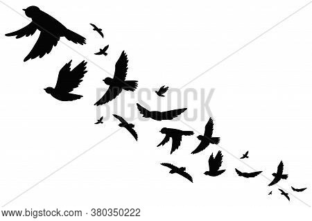Flock Of Bird Migration Black Silhouette In Flying. Vector Illustration Isolated On White Background
