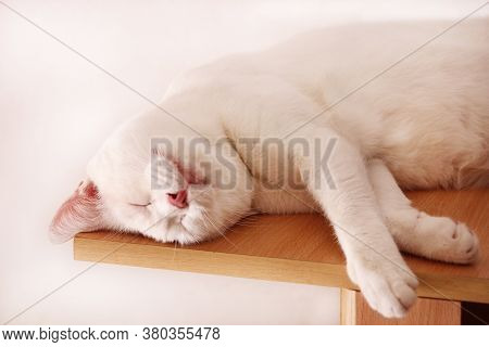 Portrait Of Lovely Cute White Cat Rest And Sleep In Room Of Apartment. Dear Sweet Female Cat Enjoy A