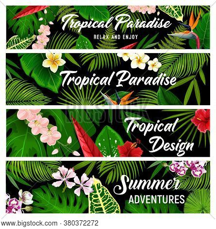 Tropical Plants And Flowers Vector Banners, Exotic Palm Leaves And Blossoms. Floral Cards With Tropi