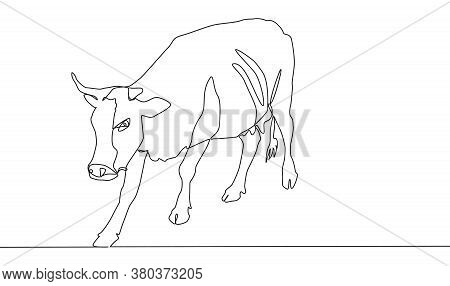 Continuous Line A Beautiful Cow Is Standing. Drawing Black Thin Line On White Background