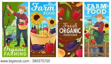Farm, Farming And Gardening Agriculture, Vector Harvest Vegetables And Fruits. Farmer Gathering Harv