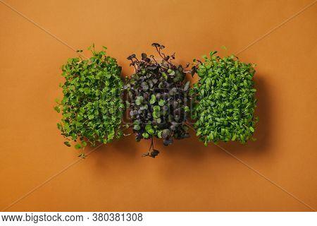 Vegan Micro Arugula Greens Shoots, Micro Watercress Greens Shoots, Micro Radish Greens Shoots On Ora