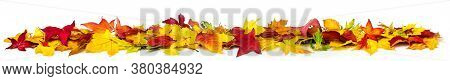 Colorful Autumn Leaves On The Ground As A Border, Extra Wide Panorama Format With Vibrant Colors, Is