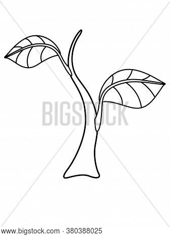 Sprout - Small Plant - Vector Linear Illustration For Coloring. Sapling, Small Tree - Element For Co