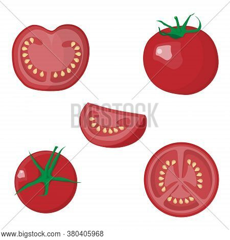 Slicing Different Slices Of Fresh Tomato. Vector