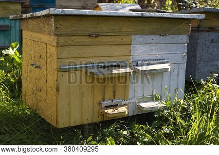 Old Beehive In The Apiary. The Hive Is Yellow And White. Bees Fly Near The Hive.