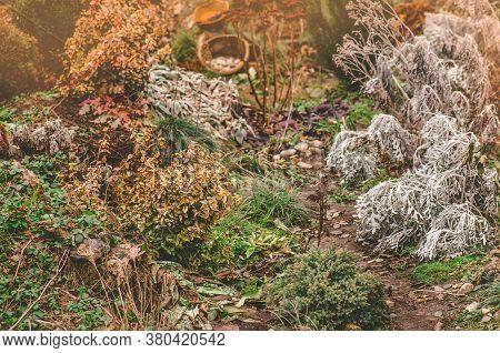 Beautiful Autumn Garden And Blooming Perennials. Home Garden On House Backyard.