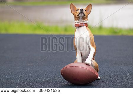 Funny Happy Beautiful Dog Is Playing With American Football Ball On The Sport Ground, Playground. Ba