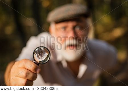 Picky Detective In Forest. Explore Nature. Pensioner With Magnifier Exploring Forest Selective Focus