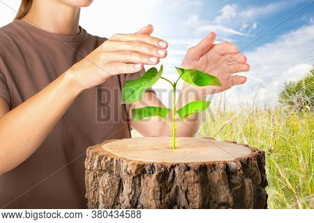 Protect Nature Concept. Woman Hands Protective Green Plant. Ecology Concept. Nature Background