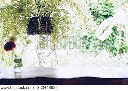 Fern Plant Leaves Decorating On Balcony Terrace