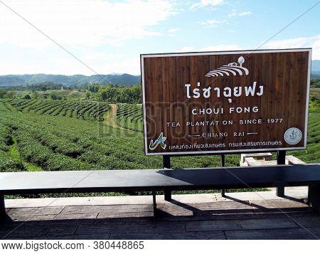 Chiang Rai. Thailand, June 17, 2017: Poster For Choui Fong, Tea Plantation Since 1977 In The Mountai