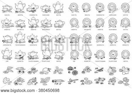 Black And White Tea Types Drawing Set - Vector Illustration