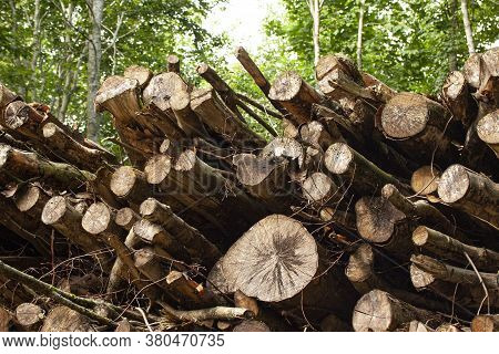 Stacked Rough Timber And Wooden Logs Lie In The Forest. Low Angle. Ecology. Deforestation And Enviro