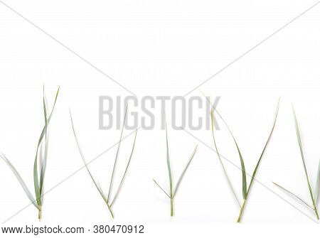 Meadow Grass Growing On The Baltic Coast, Flat Lay