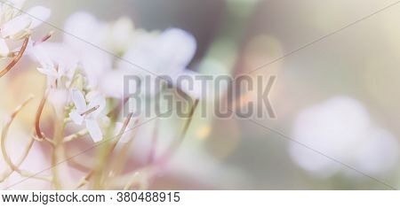 Beautiful Background With Wild White Flowers Close Up