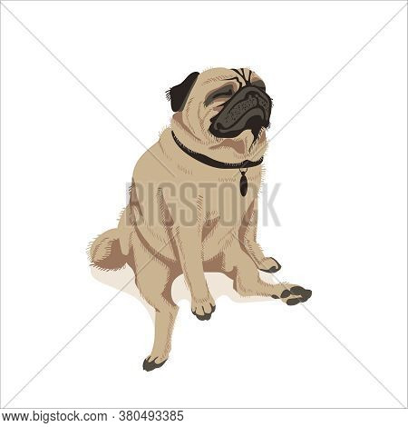 Cute Fawn Pug Dog Pet. Adorable Friendly Purebred Chubby Domestic Animal In Funny Pose Cartoon Vecto