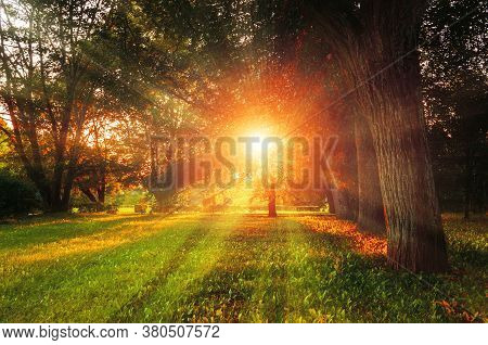 Autumn landscape - colorful autumn city park with deciduous yellowed autumn trees and sunset light breaking through the autumn tree branches. Autumn sunset view, autumn evening landscape