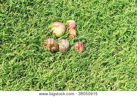 apple on the grassy