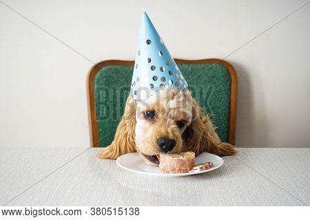 American Cocker Spaniel Dog Birthday And Holiday Treat.