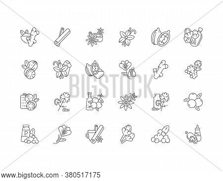 Asian Linear Icons Set. Culinary Herbs. Cooking Ingredients. Natural Supplements. Cloves And Star An