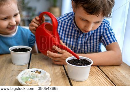Cute Boy And Girl Are Sitting At Table And Engaged In Sowing Seeds For Cultivation. Children Sow See