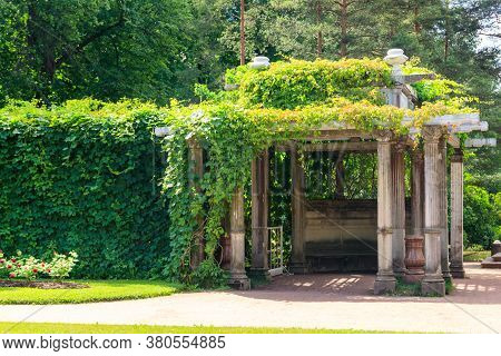 Old Pergola-veranda 1865 In The Italian Style Twined With Wild Grapes At The Catherine Park In Tsars
