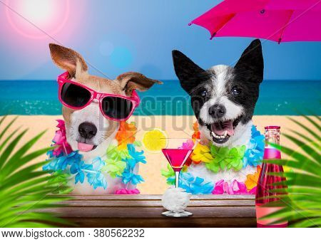 Lady Diva Poodle Dog  With Husband Wearing Sunglasses In Summer Vacation Holidays   With  Cocktail D