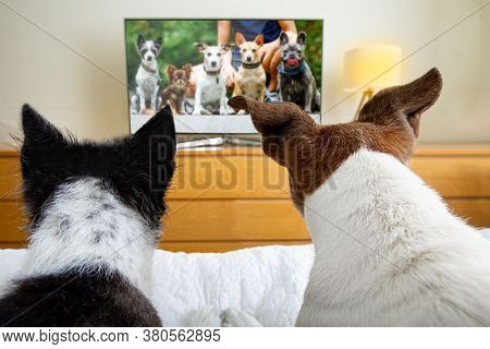 Couple Of Dogs Wacthing Streaming  Tv Program , Movie Or Series In Bed Cozy Together