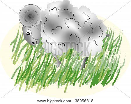 Vector sheep