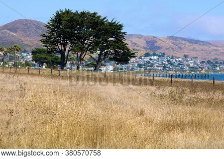Wooden Fence On A Grassy Field With A Cypress Tree Overlooking The Pacific Ocean And The Coastal Tow