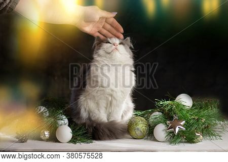 Young Woman Playing With Cat In Home At Christmas