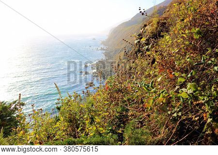 Coastal Chaparral Shrubs Including Black Sage Plants And Wildflowers Taken On A Mountainous Slope Ov