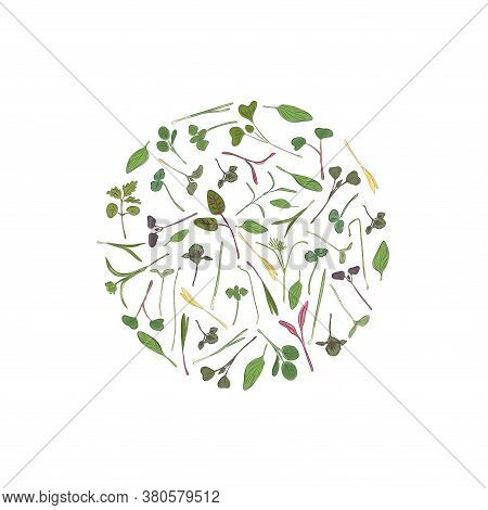 Vector Round Frame With Microgreen. Herbs - Pea, Sunflower, Onion, Corn, Basil, China Rose, Spinach,
